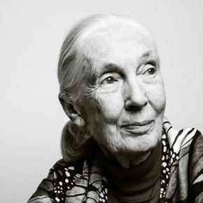 At 85, Jane Goodall still inspires