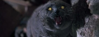'Animal Graveyard': How a Zombie Cat Tragedy Shaped One of Stephen King's Best Adaptations in 1989