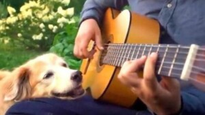 1624023938 The emotional farewell of a musician to his deceased dog