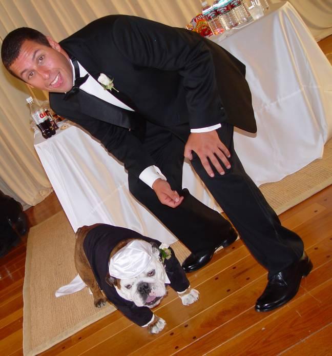 Adam Sandler's dog was the best man at his wedding