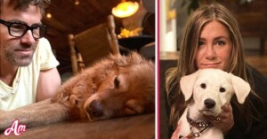Jennifer Aniston Ryan Reynolds These Stars Who Adopted Dogs Found