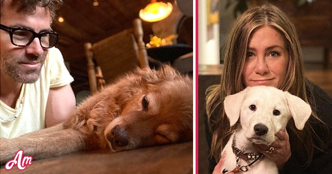 Jennifer Aniston, Ryan Reynolds: These Stars Who Adopted Dogs Found On The Streets