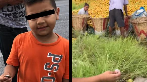 Honest since childhood: child goes viral after asking for oranges before trying to grab it without permission [VIDEO]