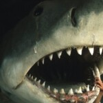 She filmed 'Jaws' and then worked to undo the damage