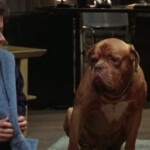 Turner & Hooch on Disney +: 3 things to know about the movie with Tom Hanks who inspired the series