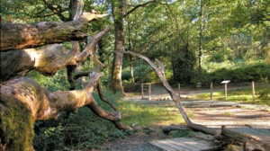 The Navarrese forest that will host storytelling and concerts in August and September
