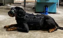 dogs glasses ar army usa