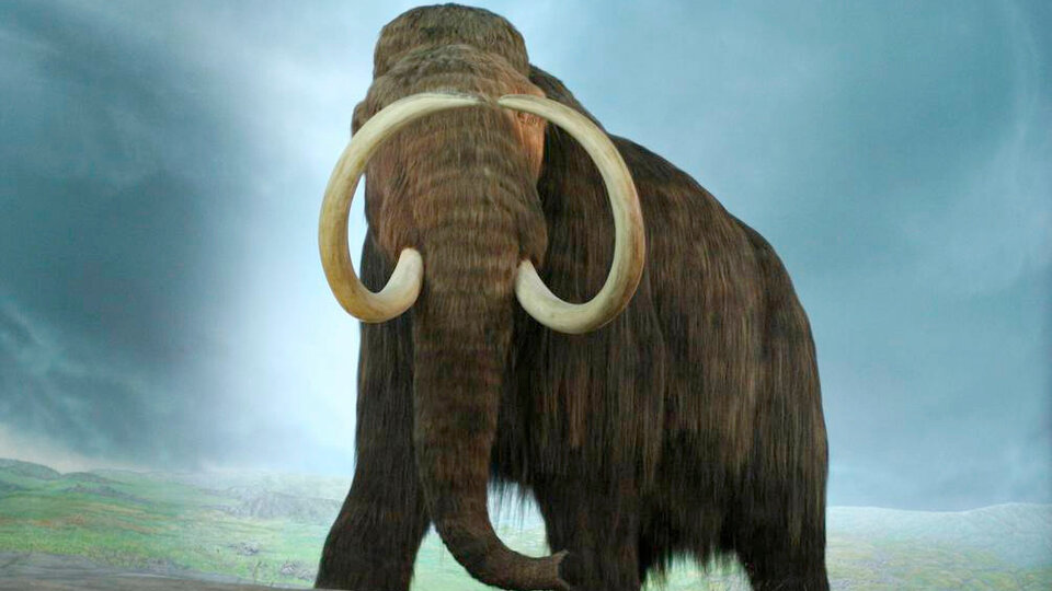 They try to resurrect the extinct woolly mammoth Thanks