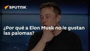 Why doesn't Elon Musk like pigeons?
